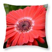 Dsc520-001 Throw Pillow