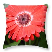 Dsc524-001 Throw Pillow