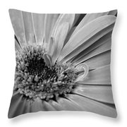 Dsc668d1 Throw Pillow