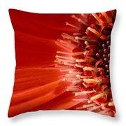 Dsc709d-002 Throw Pillow