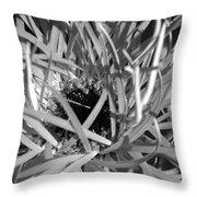 Dsc745d1 Throw Pillow