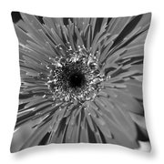 Dsc751d2-001 Throw Pillow