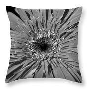 Dsc752d1 Throw Pillow