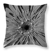 Dsc753d1 Throw Pillow