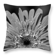 Dsc756d1 Throw Pillow