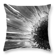 Dsc766d1-001 Throw Pillow