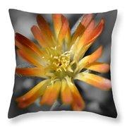 Dsc798d-001 Throw Pillow