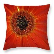 Dsc883d-001 Throw Pillow