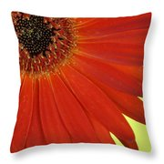 Dsc883d-002 Throw Pillow