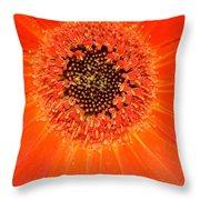 Dsc898d-002 Throw Pillow