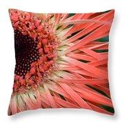Dsc919d1-001 Throw Pillow