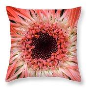 Dsc921d1-003 Throw Pillow