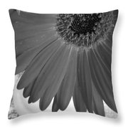 Dsc926d2 Throw Pillow