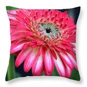 Dsc968z-001 Throw Pillow