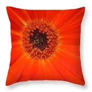 Dscn2633d Throw Pillow