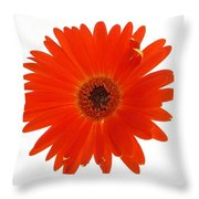 Dscn2651d2 Throw Pillow