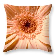 Dscn3360a1 Throw Pillow