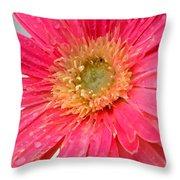 Dscn546911c Throw Pillow