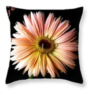 Dscn6163a Throw Pillow