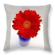 Dscn85381c Throw Pillow