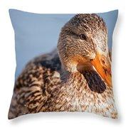 Duck In Water Throw Pillow