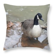 Duck Wading In A Stream Throw Pillow