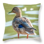 Duckling By The Lake  Throw Pillow
