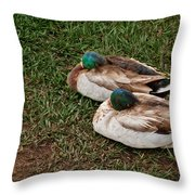 Ducks At Rest Throw Pillow