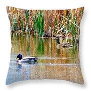 Ducks In A Marsh Throw Pillow