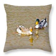 Ducks Pair Looking To Camera Throw Pillow