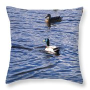 Ducks Swimming  Throw Pillow