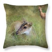 Duiker Endangered Antelope Throw Pillow