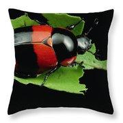 Dung Beetle Panama Throw Pillow