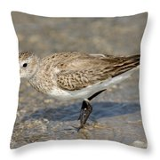 Dunlin Calidris Alpina In Winter Plumage Throw Pillow