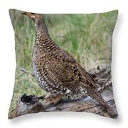 Dusky Grouse Dendragapus Obscurus Hen Throw Pillow