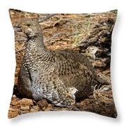 Dusky Grouse With Chicks Throw Pillow