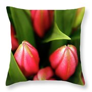 Dutch Bulbs Throw Pillow