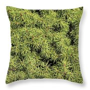 Dwarf Evergreen Throw Pillow