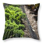 Dwarf Green Curled Throw Pillow
