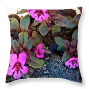 Dwarf Purple Monkeyflower In Lava Beds Nmon-ca Throw Pillow