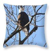 Bald Eagle Sunny Perch Throw Pillow