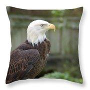 Eagle 2 Throw Pillow