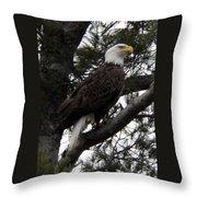 Eagle 9786 Throw Pillow