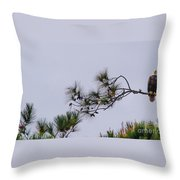 Eagle In The Pines Throw Pillow