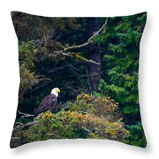 Eagle In Trees  Throw Pillow