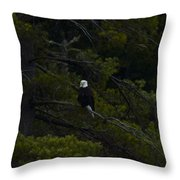 Eagle In White Pine Throw Pillow