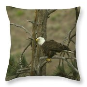 Eagle On A Tree Branch Throw Pillow
