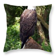 Eagle Portrait Throw Pillow