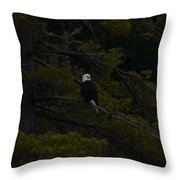 Eagle Splendor Throw Pillow