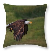 Eagle With Prey Throw Pillow
